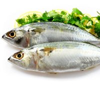 indian-mackerel-thumb