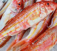red-mullet-thumb