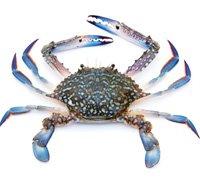 crab-thumb