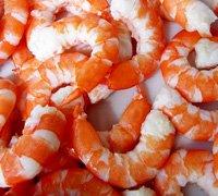 cooked-peeled-shrimp-thumb